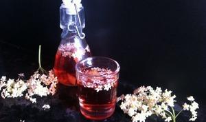 Le vin de fleurs de sureau