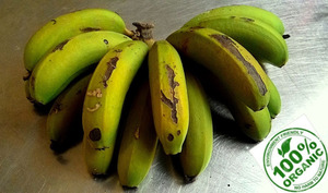 Biomasse de banane verte