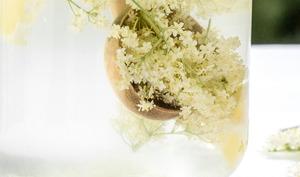 Limonade aux fleurs de sureau