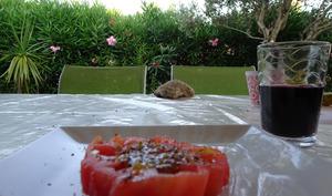 Tomate en salade, vanille et zeste de citron vert de Frédéric Anton
