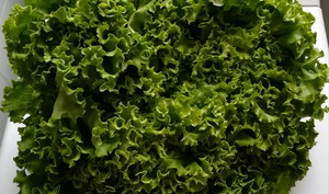 Comment nettoyer la salade verte