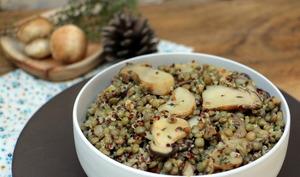 Salade de lentilles et quinoa aux cèpes