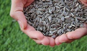 5 graines saines que nous devrions manger tous les jours