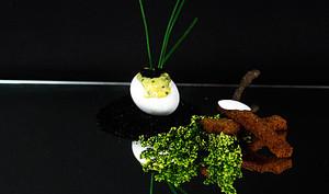Oeufs brouillés à la crème de chou fleur et oeufs de homard