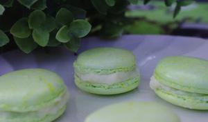 Macarons chocolat blanc et menthe fraiche