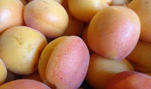 Congélation des abricots