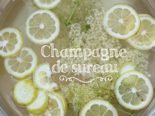 Champagne de sureau