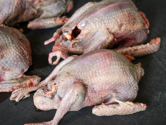Pigeon en deux cuissons