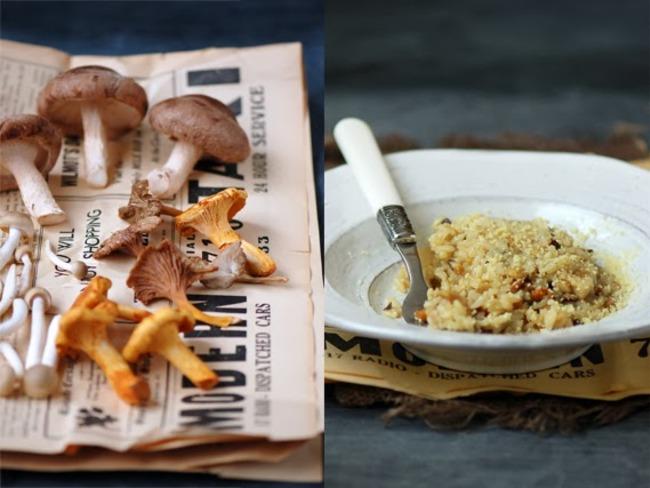 Les champignons de cueillette