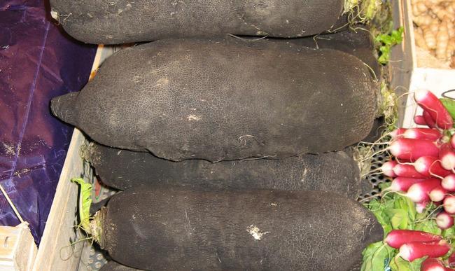 Radis noir sur le marché