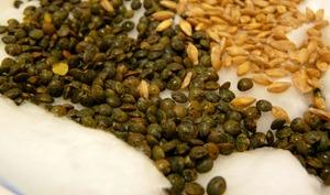 Lentilles vertes du Puy et petit épeautre graines.