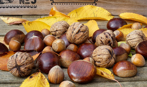 Récolte de châtaignes, noix et noisettes