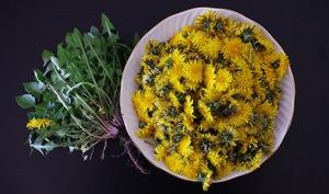 Fleurs et feuilles de pissenlits