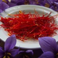 Safran fleur et pistils