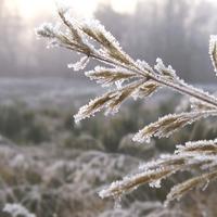 Gelée hivernale