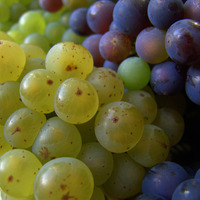 Raisins noirs et raisins blancs