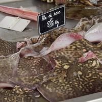 Ailes de raie sur l'étal du poissonnier