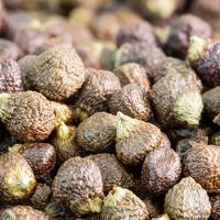 poivre de Guinée