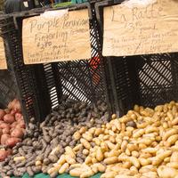 Rattes sur un marché