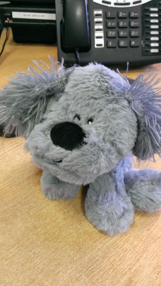 A grey fluffy toy dog