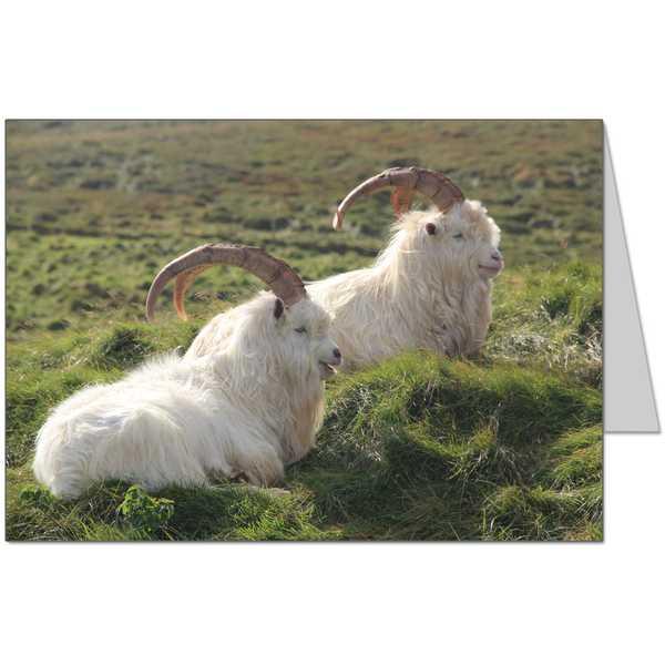 Kashmir Goats Card
