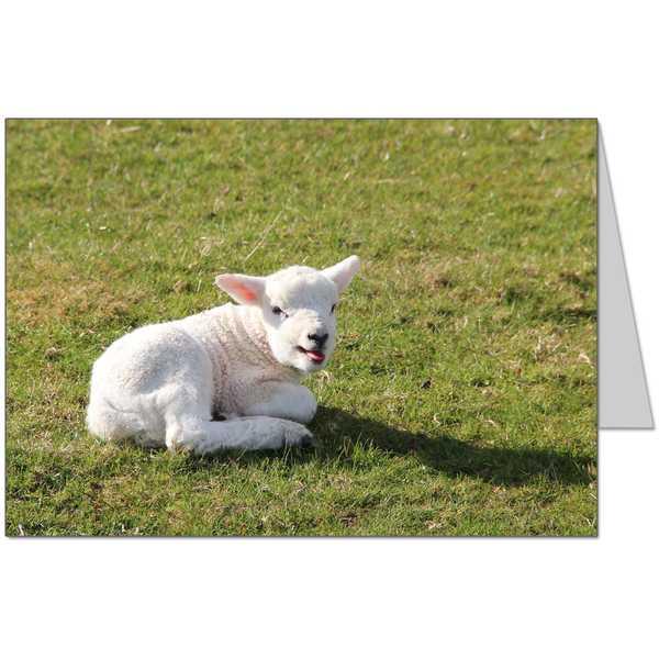 Lamb in Keswick Card