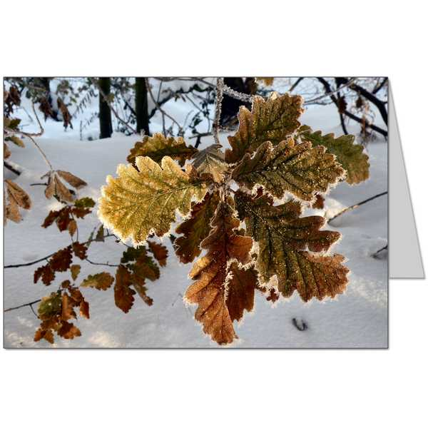 Frosty Oak Leaf Card