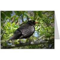 Blackbird 2 Card