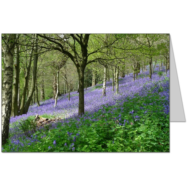Bluebell Wood  Card