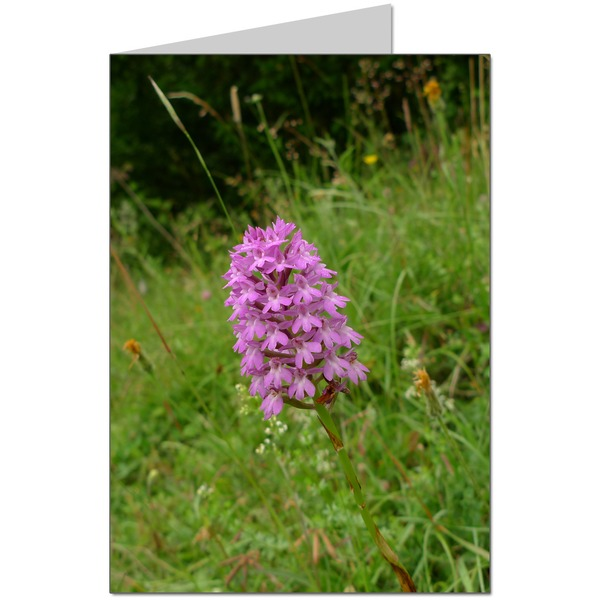 An Orchid on the North Downs Way  Card