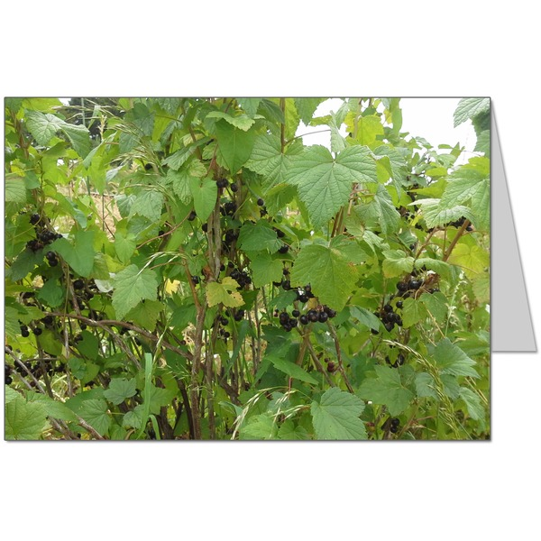Blackcurrants Card