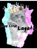 Live Love Lagata