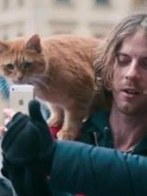 2016 Street Cat Named Bob Still · By: Still from film