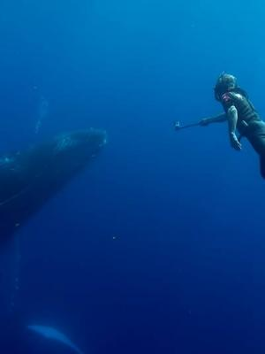 2016 Filming a whale for the TV series Ocean Vet · By: Andrew Smith