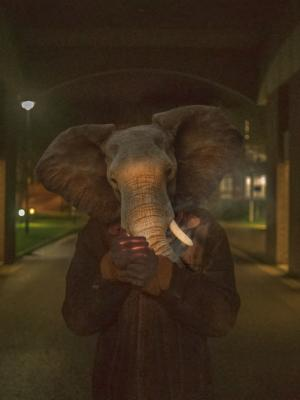 Photo Fine Art - We Are Not Elephants