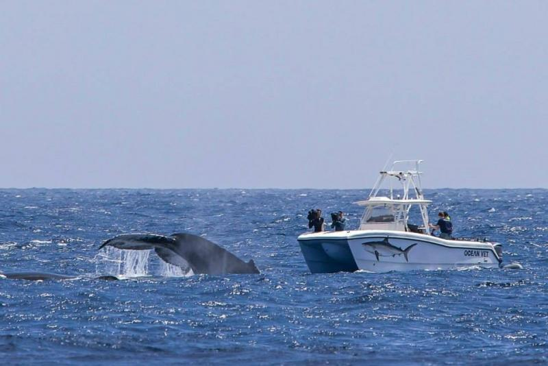 Filming a whale for the TV series Ocean Vet