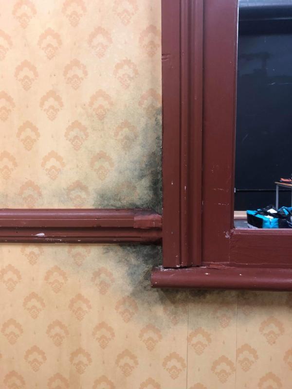 Detail of mould on wallpaper for Revenge Express, short film