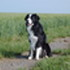 Lucky - Border Collie