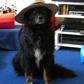 Maika ( Border Collie - Tibet Terrier Mischling )