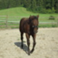 Rosalie ( Quarter Horse, Paint Horse - Appaloosa Mix )
