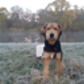 Maiky ( Airedale Terrier )