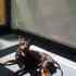 King - English Toy Terrier