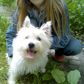 Cindy ( West Highland White Terrier )