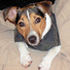 Snoopy - Jack Russell Terrier