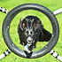 Chilli con Cane - Border Collie - Groenendael Mischling