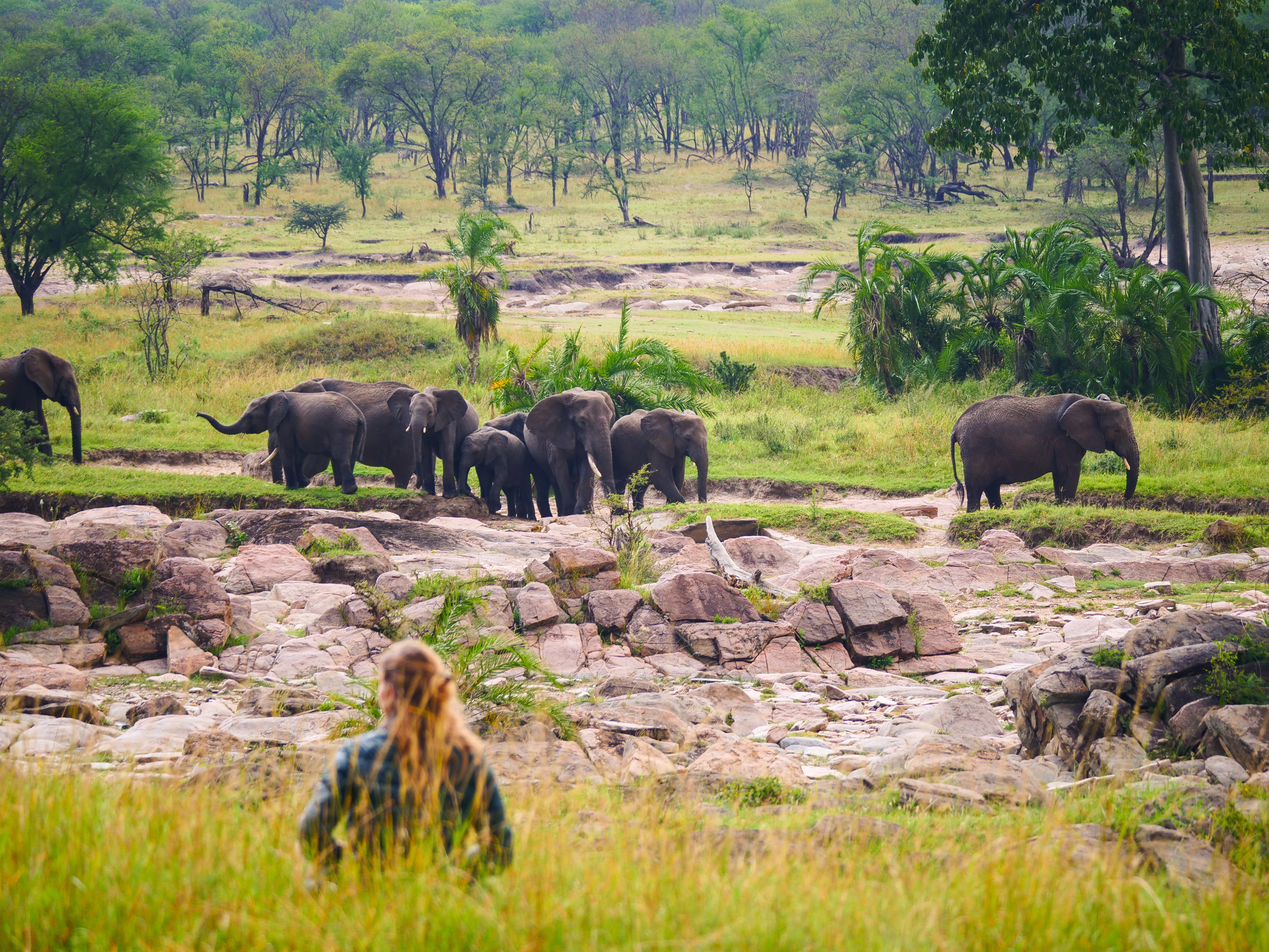 Elephant-encounters-from-Kogatende-Green-Camp.jpg#asset:116558