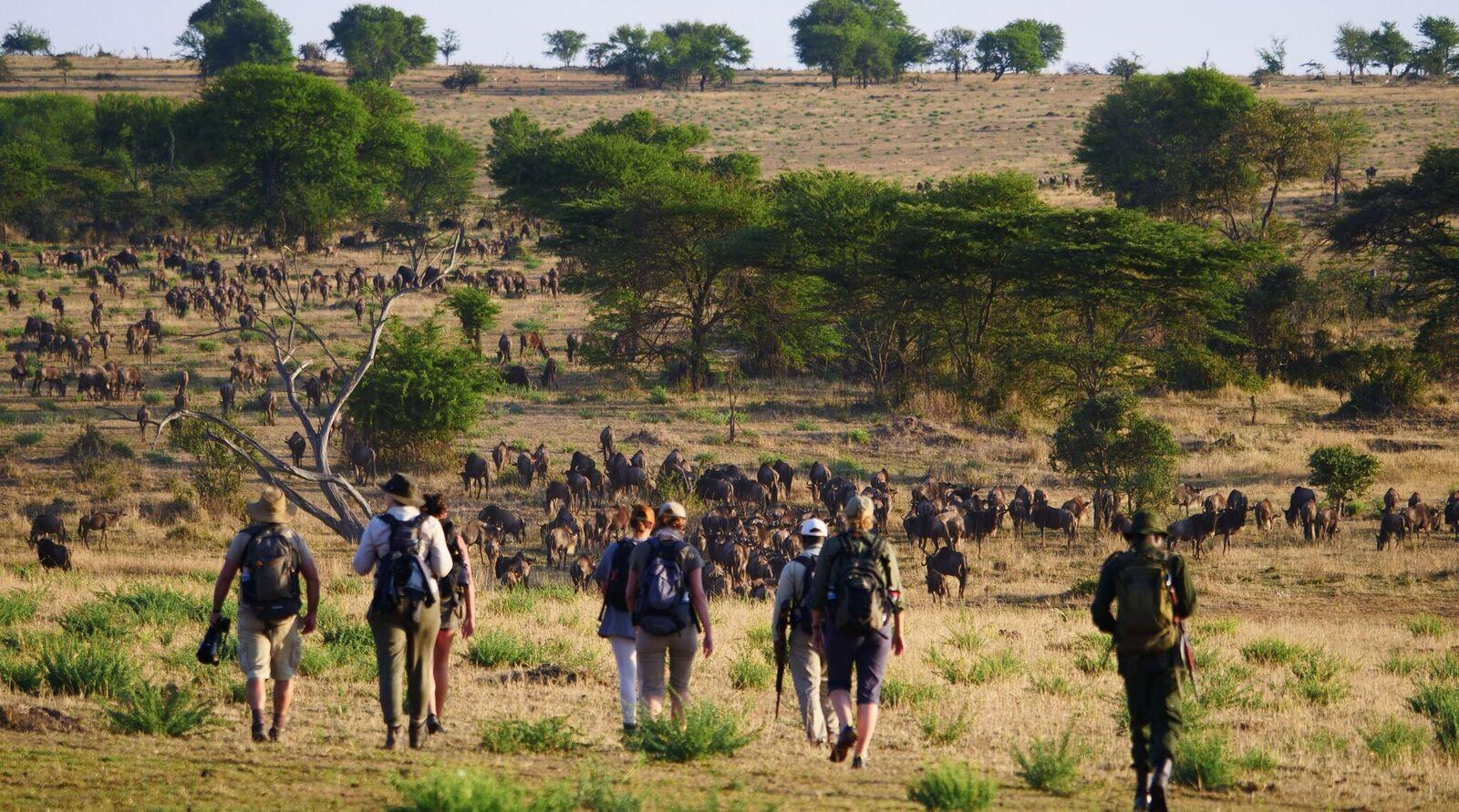 Wayo-Walking-in-Serengeti.jpeg#asset:89878