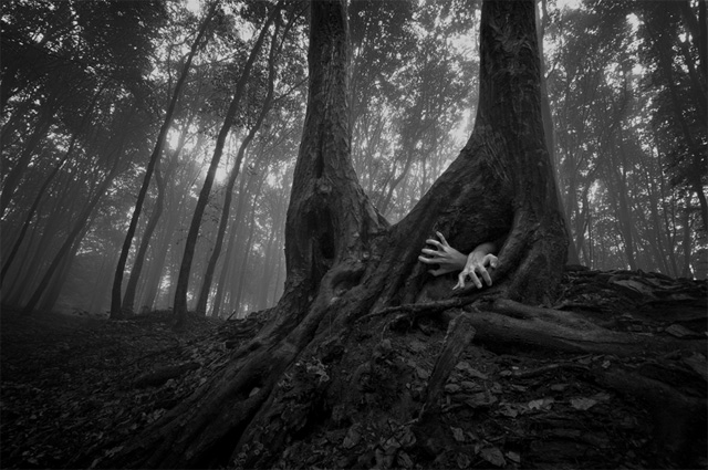 Haunted woods to terrify your players for Haunted woods ideas