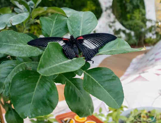 The Butterfly House @ Al Noor Island @ Sharjah