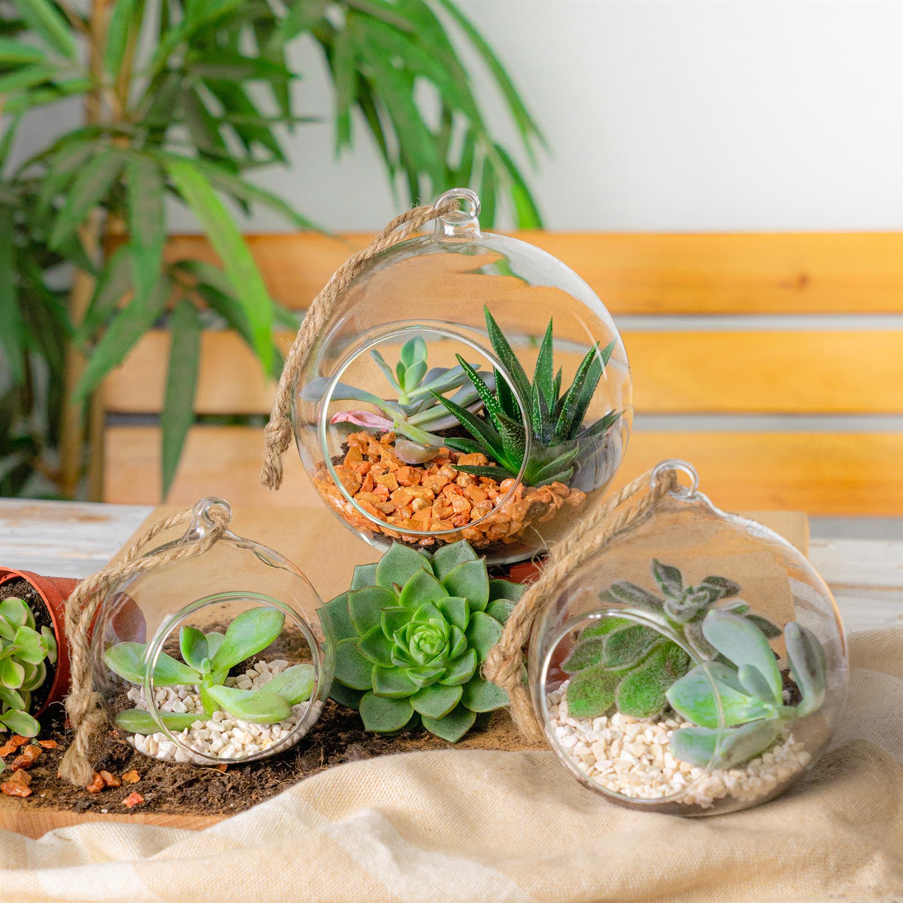 Terrarium Glass Plant Succulent Planter Indoor Hanging Flower Tabletop Ebay